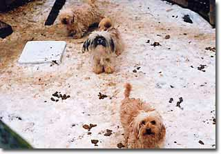 Animal Advocates BC | Puppymill Investigations