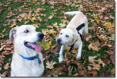 Happy Ending Dog Rescue Stories