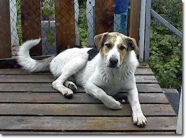 Mountain Kerr Dog Images & Pictures - Findpik