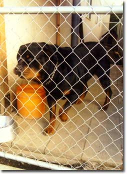 Animal Advocates Bc Chained Dog Reports