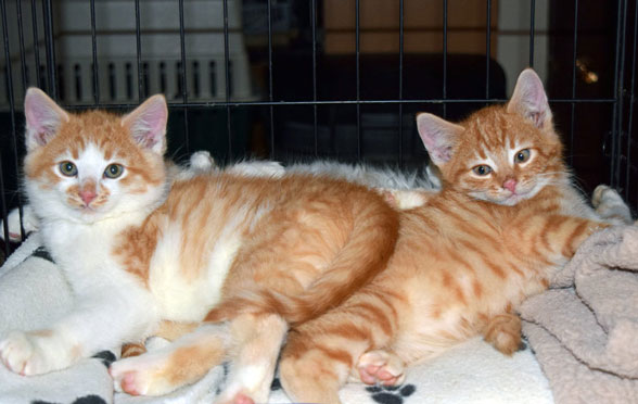 Animal Advocates BC   Abused Dog Rescue / All Animal Advocacy