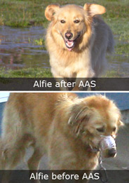 Alfie the Rescued Dog