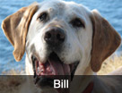 Bill's Dog Rescue Video