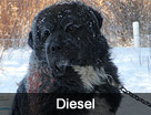 Diesel's Dog Rescue Video